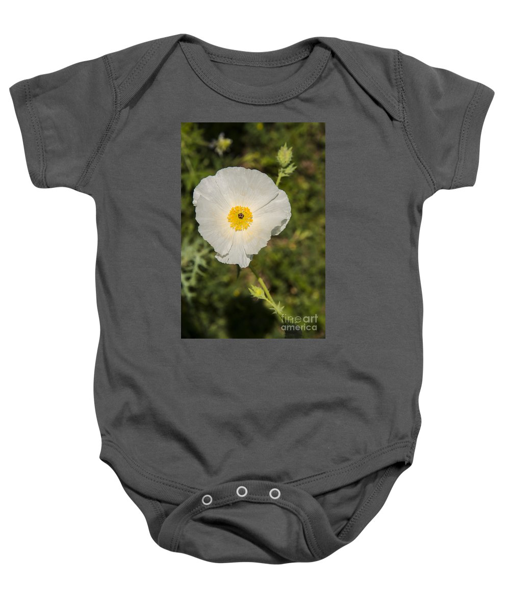 Fredericksburg Texas White Poppy Poppies Bloom Blooms Flower Flowers Spring Bud Buds Hill Country Baby Onesie featuring the photograph White Poppy With Buds by Bob Phillips