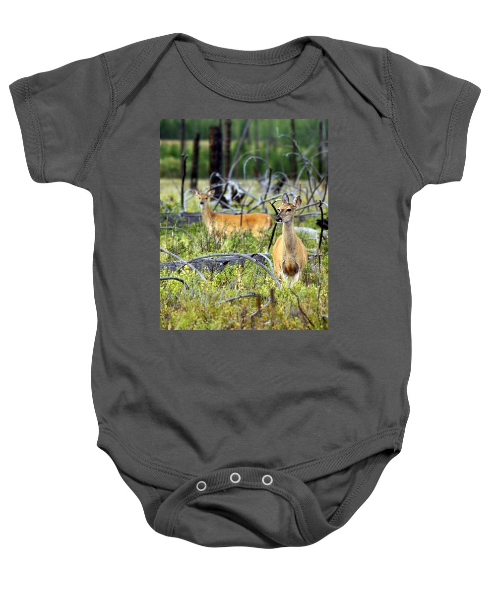 Deer Baby Onesie featuring the photograph Whitetails by Marty Koch