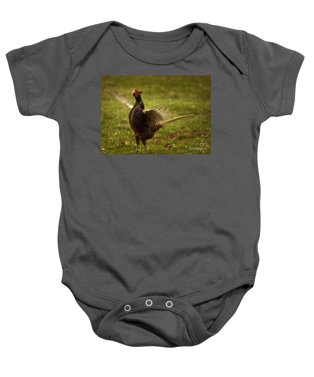 Pheasant Baby Onesie featuring the photograph Who Is The Boss by Angel Ciesniarska