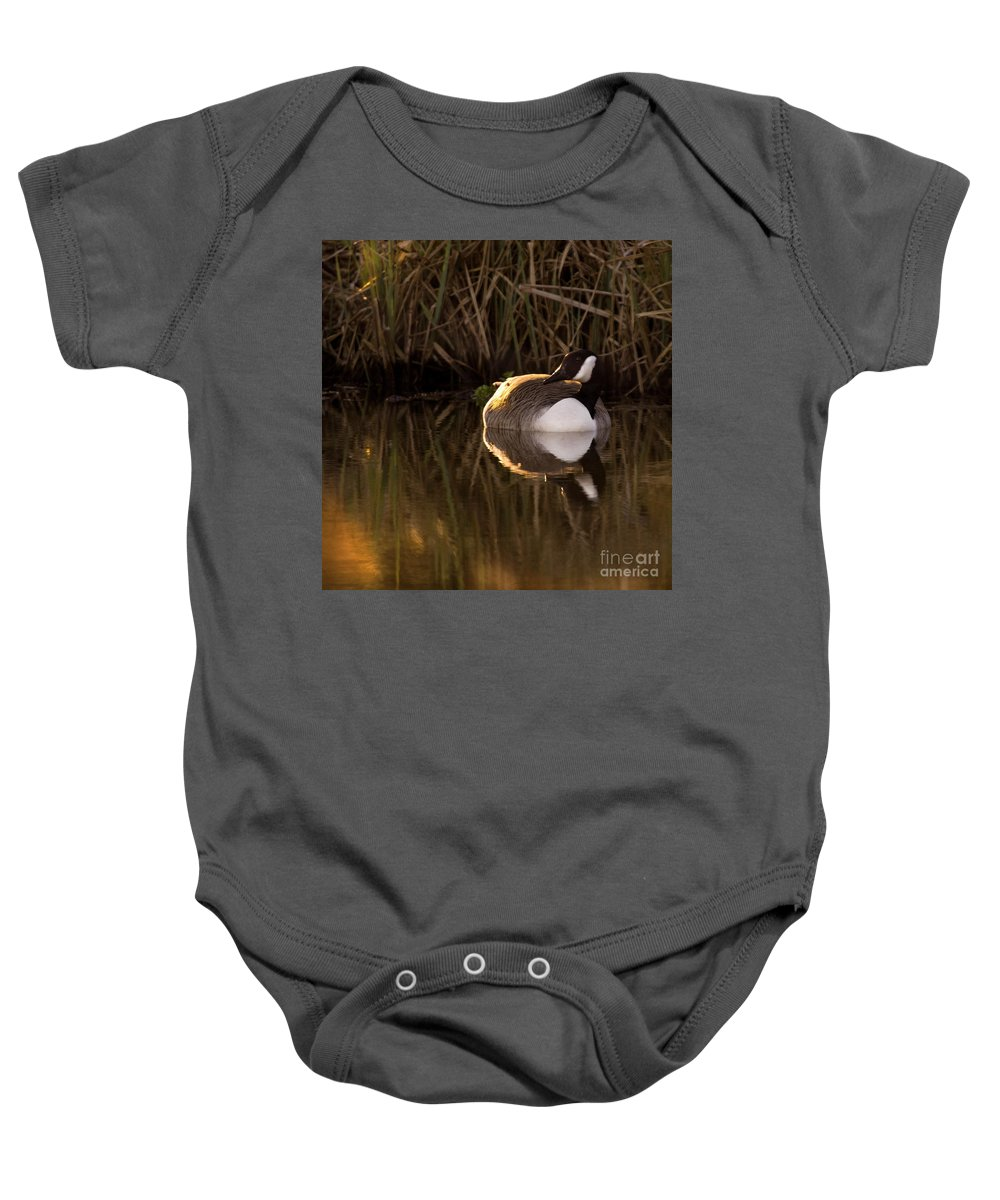 Sunset Baby Onesie featuring the photograph Wild Goose by Angel Ciesniarska
