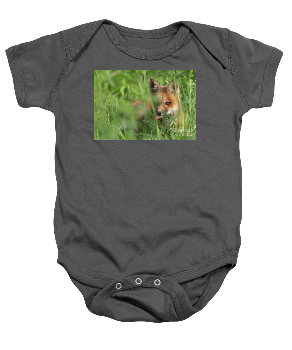Adorable Baby Onesie featuring the photograph Wild Red Fox Puppy by Mircea Costina Photography