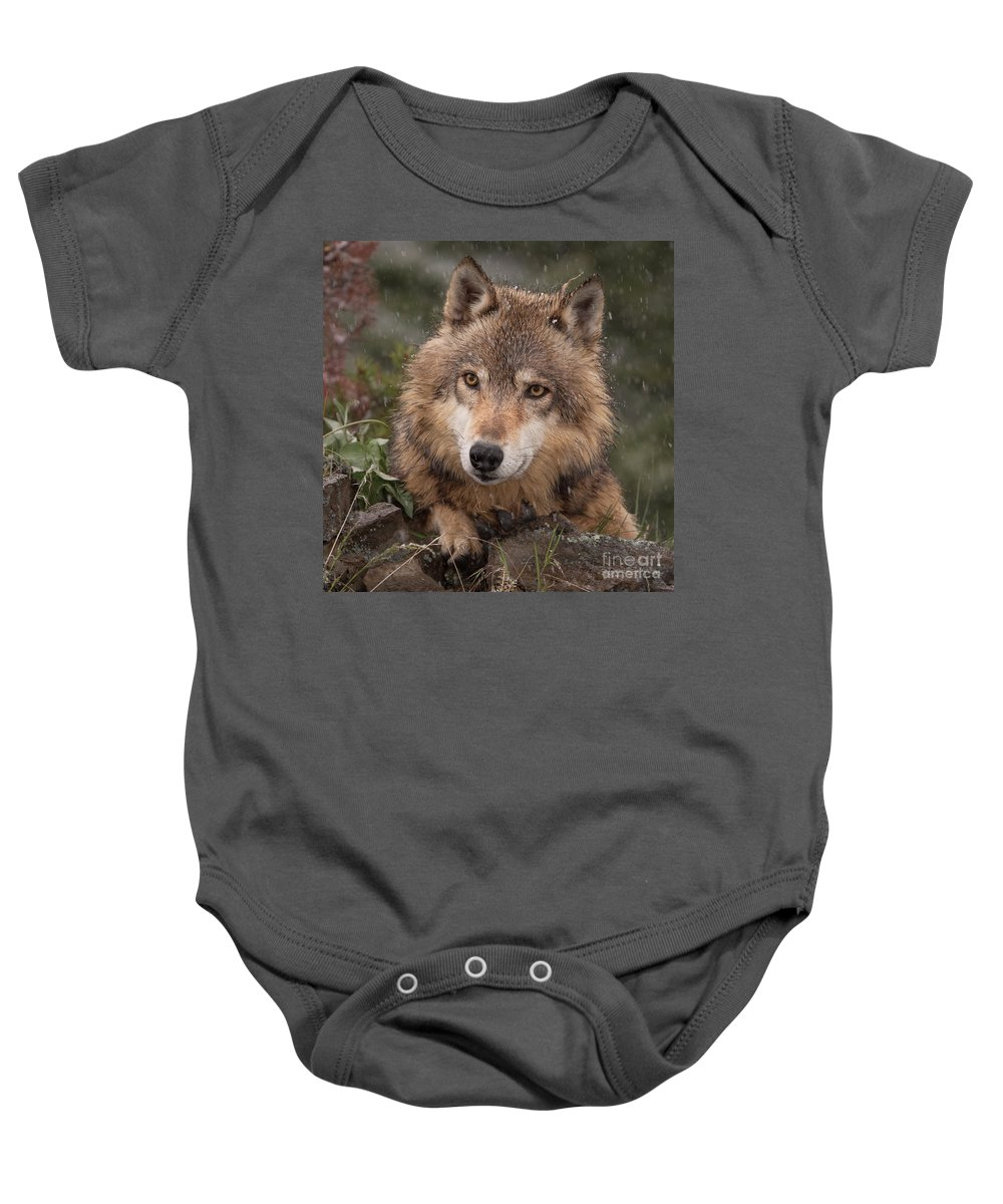 Wolf Baby Onesie featuring the photograph Wolf Face by Jerry Fornarotto