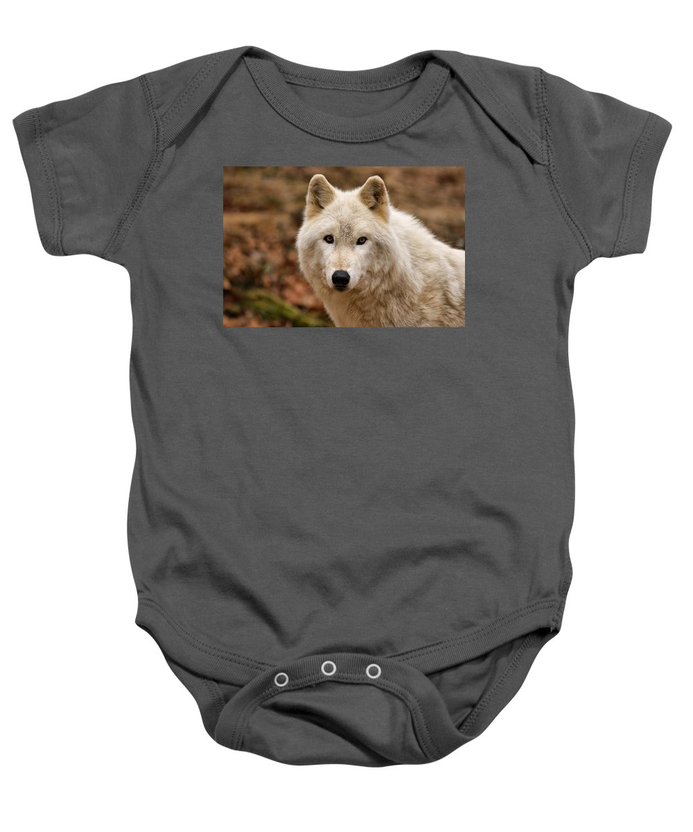 Wolf Baby Onesie featuring the photograph Wolf Watching by Sandy Keeton