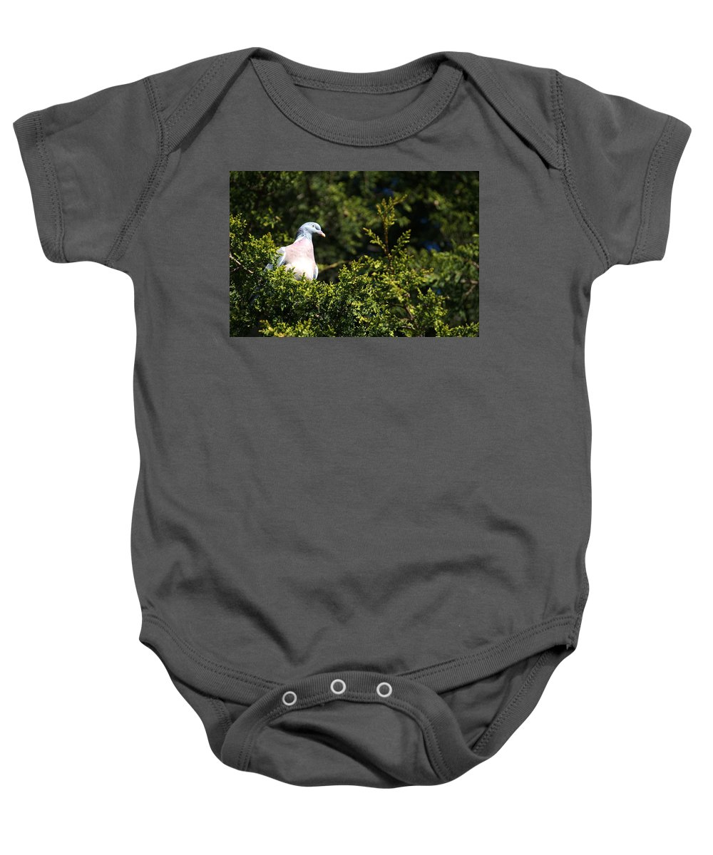 Woodpigeon Baby Onesie featuring the photograph Wood Pigeon by Chris Day