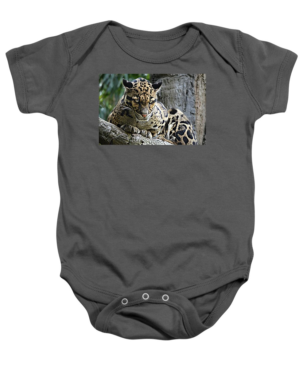 Clouded Leopard Baby Onesie featuring the photograph Y U No Haz Cheezbrgr by Ally White