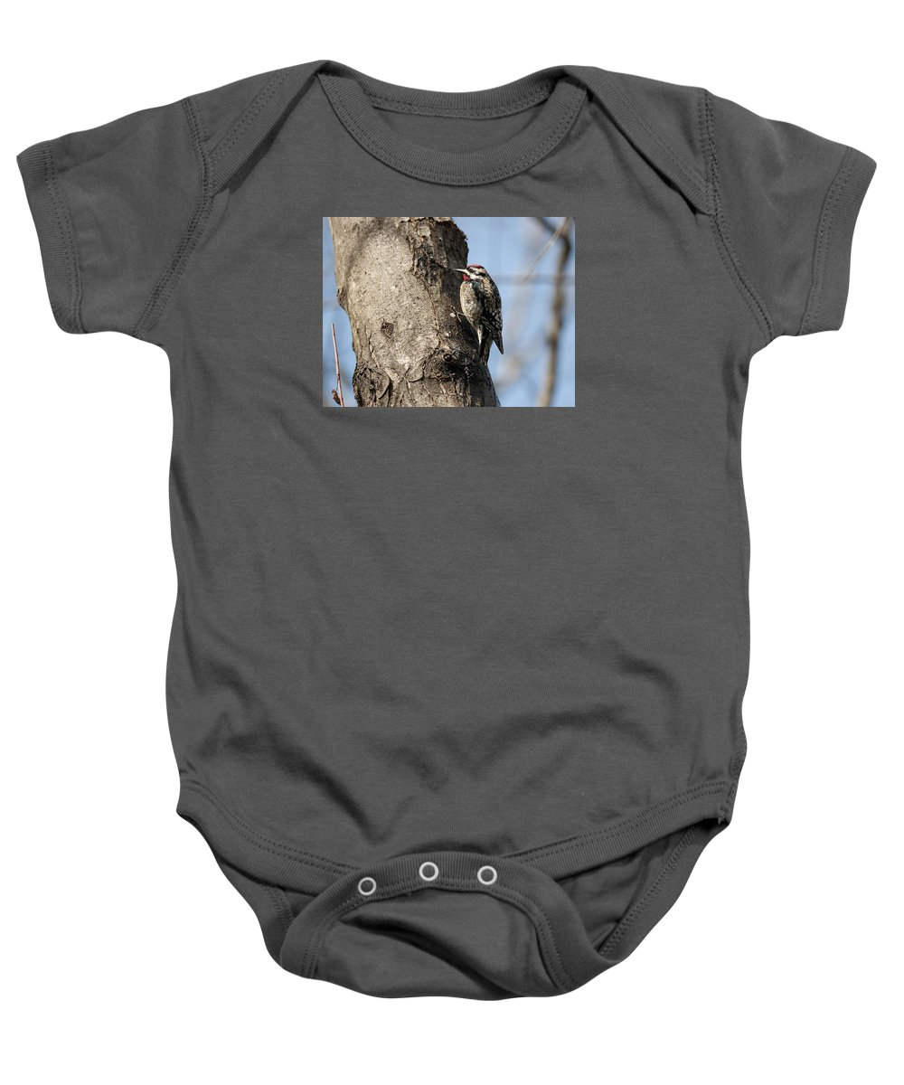 Sphyrapicus Varius Baby Onesie featuring the photograph Yellow-bellied Sapsucker by Eric Abernethy