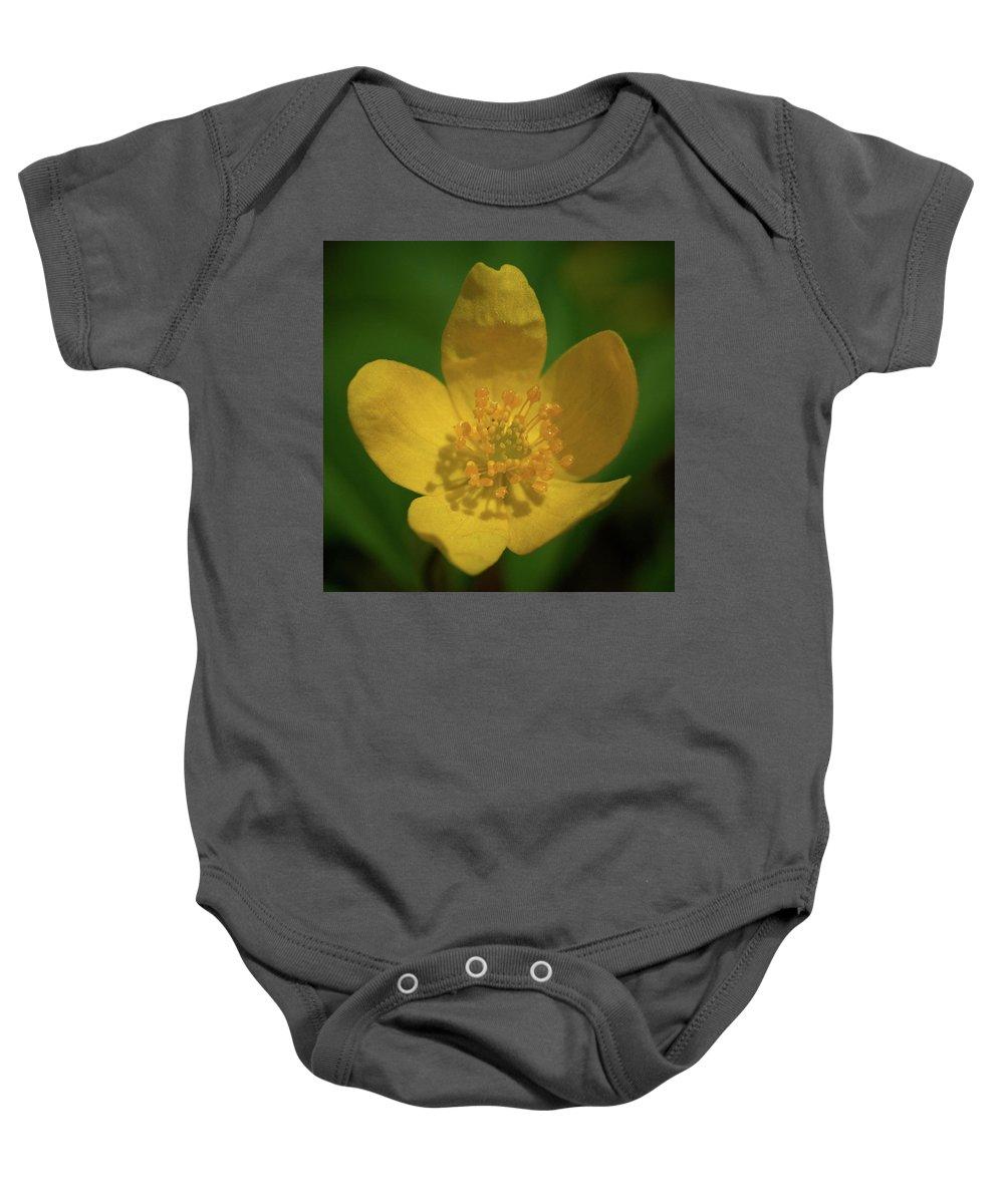 Lehtokukka Baby Onesie featuring the photograph Yellow Wood Anemone 1 by Jouko Lehto
