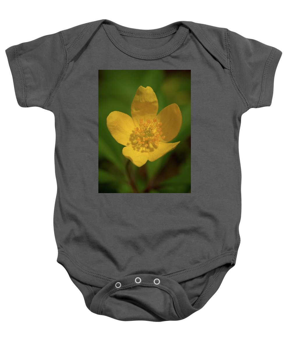 Lehtokukka Baby Onesie featuring the photograph Yellow Wood Anemone 2 by Jouko Lehto