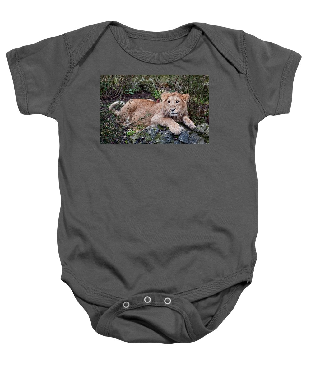 Lion Baby Onesie featuring the photograph Young Lion by Bel Menpes