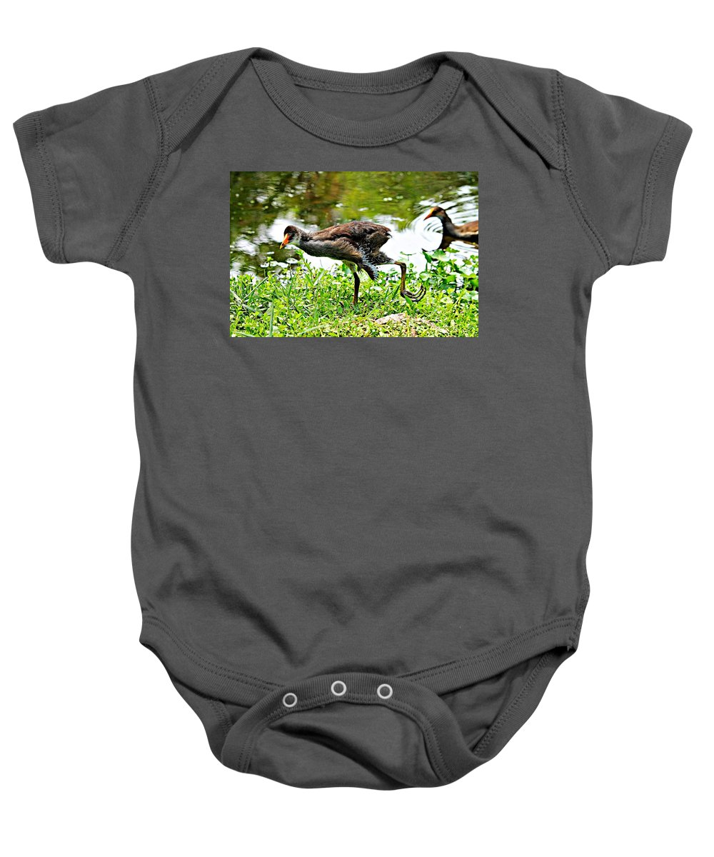 Bird Baby Onesie featuring the photograph Young Moorhen by Vicki Dreher