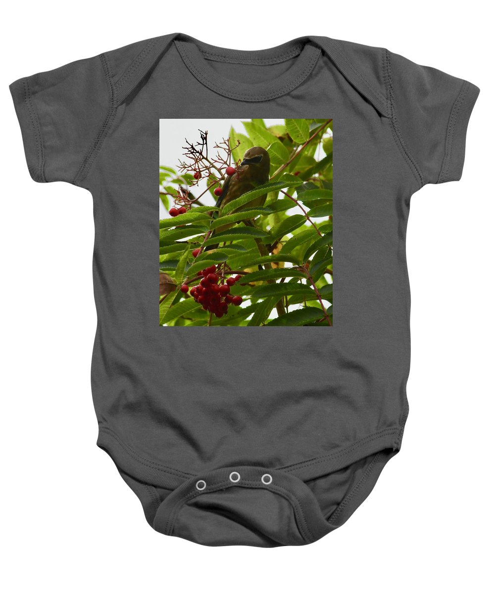 Birds Baby Onesie featuring the photograph Berries And Waxwing by Hella Buchheim