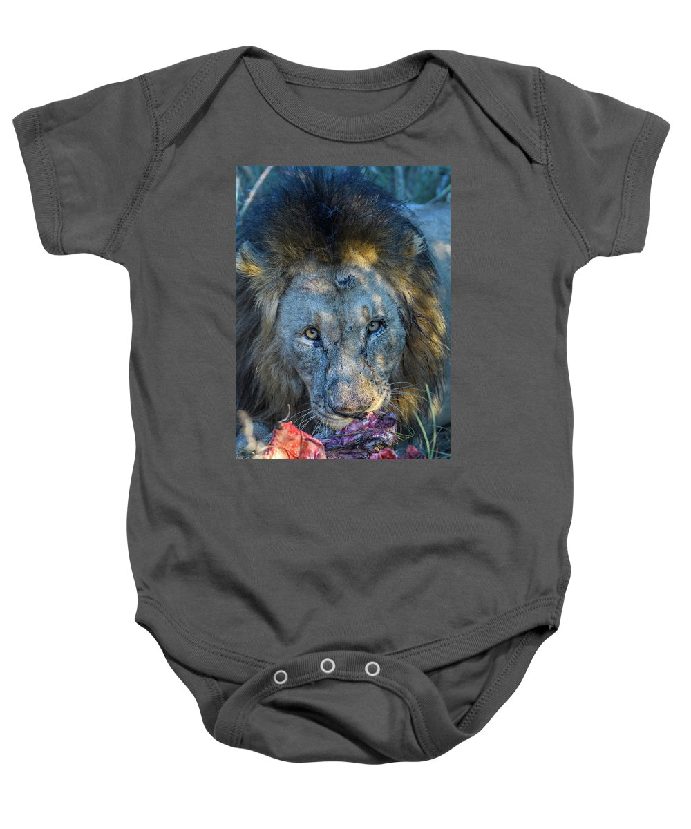 2017 Baby Onesie featuring the photograph Jungle King With Kill With Killer Looks by Sasidhar Ravinuthala