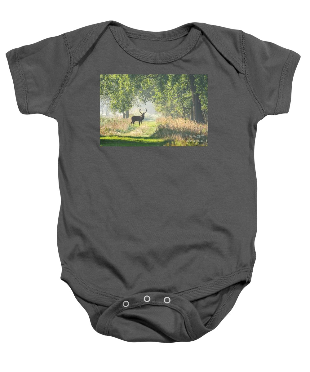 2018 Baby Onesie featuring the photograph Red Deer In The Forest by Brothers Beerens