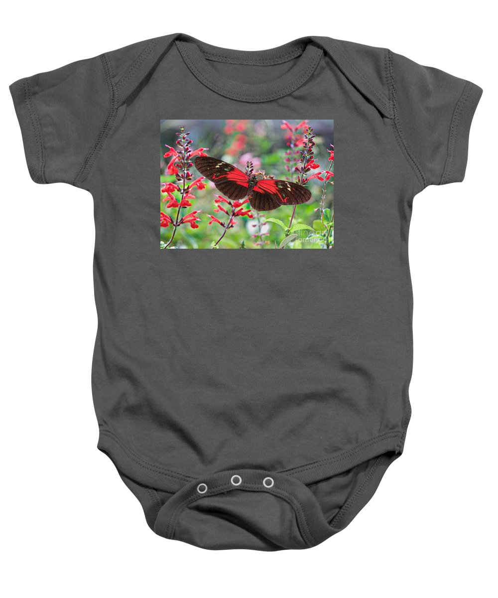 Black And Red Butterflies Baby Onesie featuring the photograph Summertime Feast 2 by Judy Kay