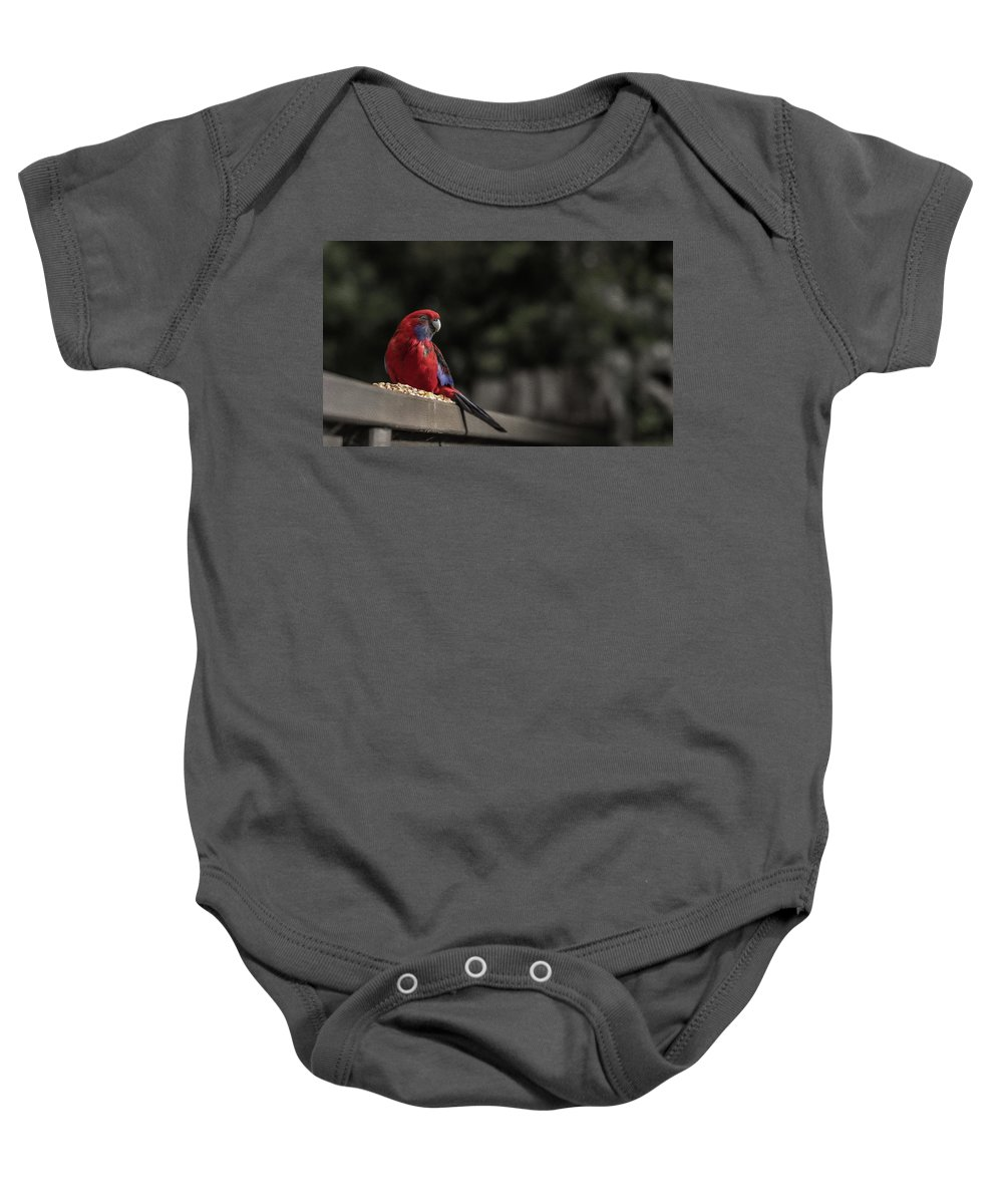 Rosella Baby Onesie featuring the photograph Rosella 1 by Leigh Henningham