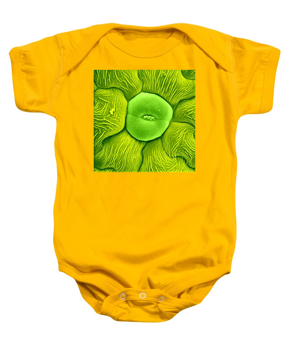 Science Baby Onesie featuring the photograph Stoma Of Loasa Plant, Sem by Biophoto Associates