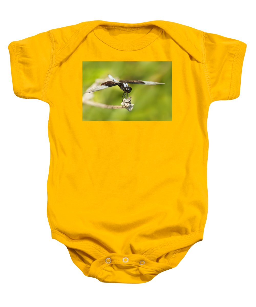 Dragonfly Baby Onesie featuring the photograph Black And White Widow Skimmer by Kathy Clark