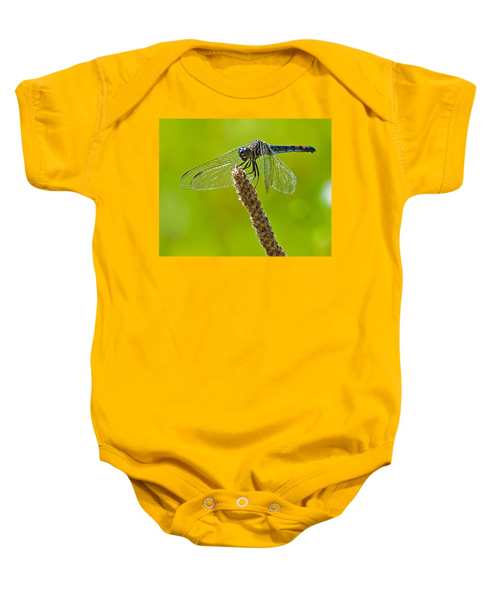 Blue Baby Onesie featuring the photograph Blue Dragonfly 6 by Photos By Cassandra