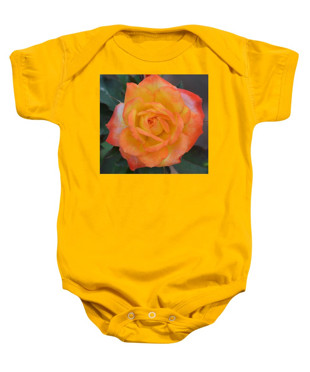 Caroty Splendor - Rose Baby Onesie featuring the photograph Caroty Splendor - Rose by Maria Urso
