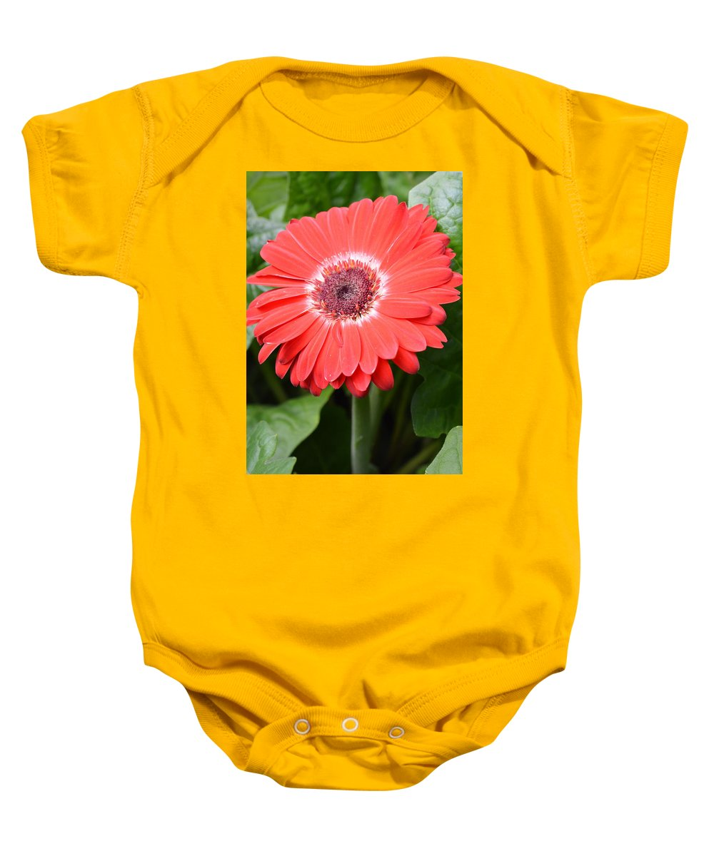 Gerber Baby Onesie featuring the photograph Dsc524-001 by Kimberlie Gerner