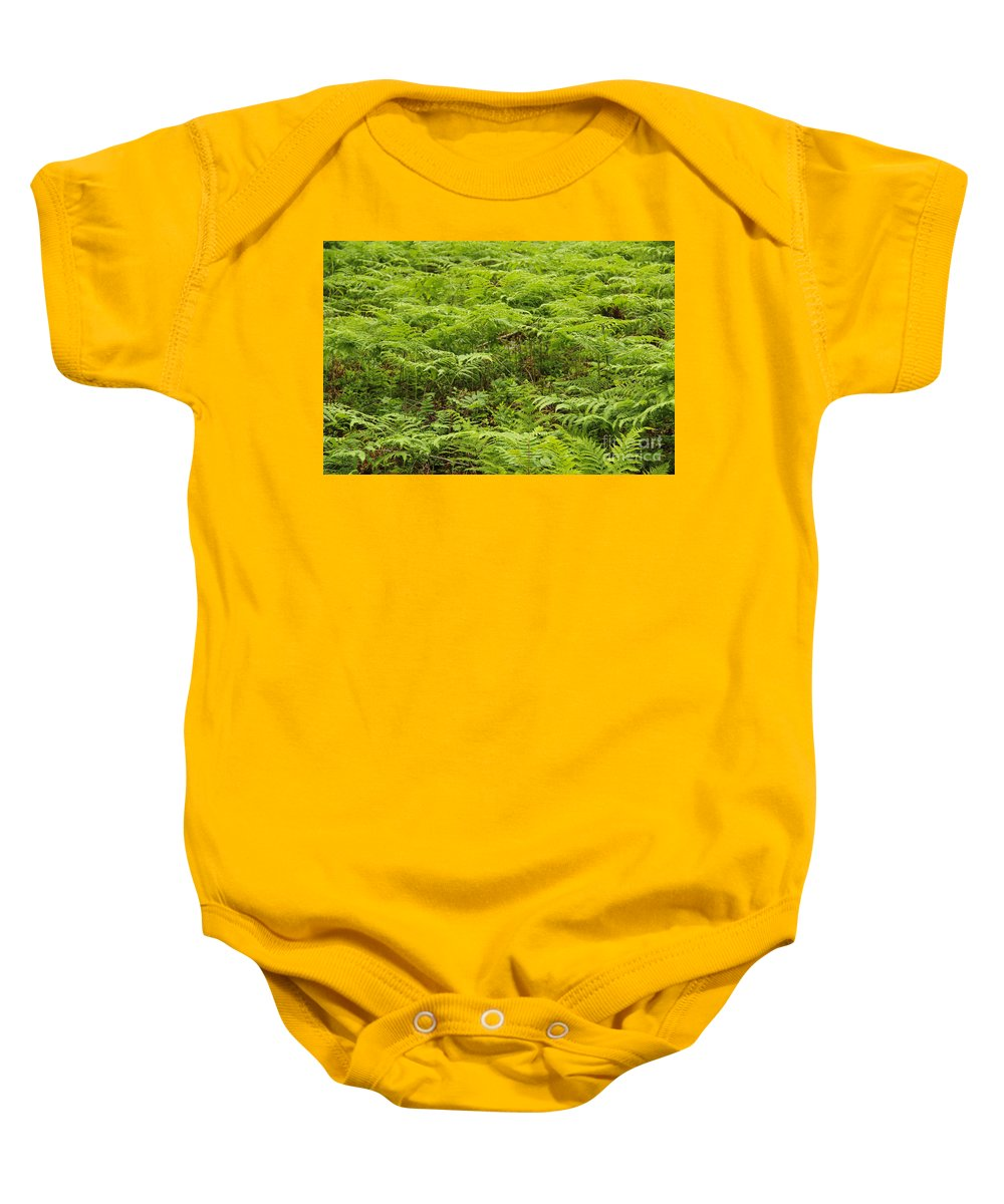 Frns Baby Onesie featuring the photograph Ferns In Summer by Kerstin Ivarsson