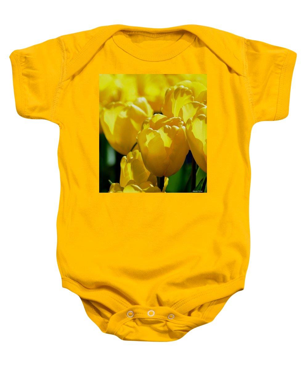 Hill Of Golden Tulips Baby Onesie featuring the photograph Hill Of Golden Tulips by Maria Urso