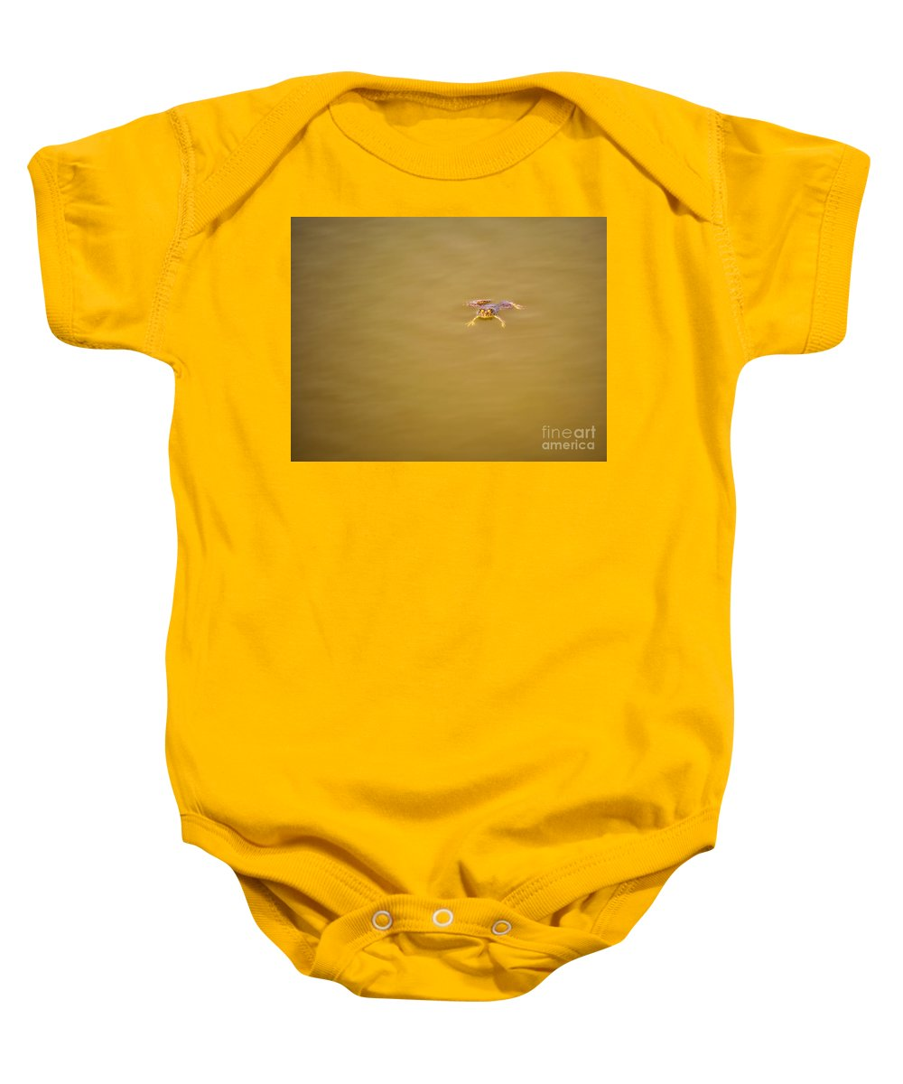 Frog Baby Onesie featuring the photograph Indian Skipper Frog On Water Surface by Image World