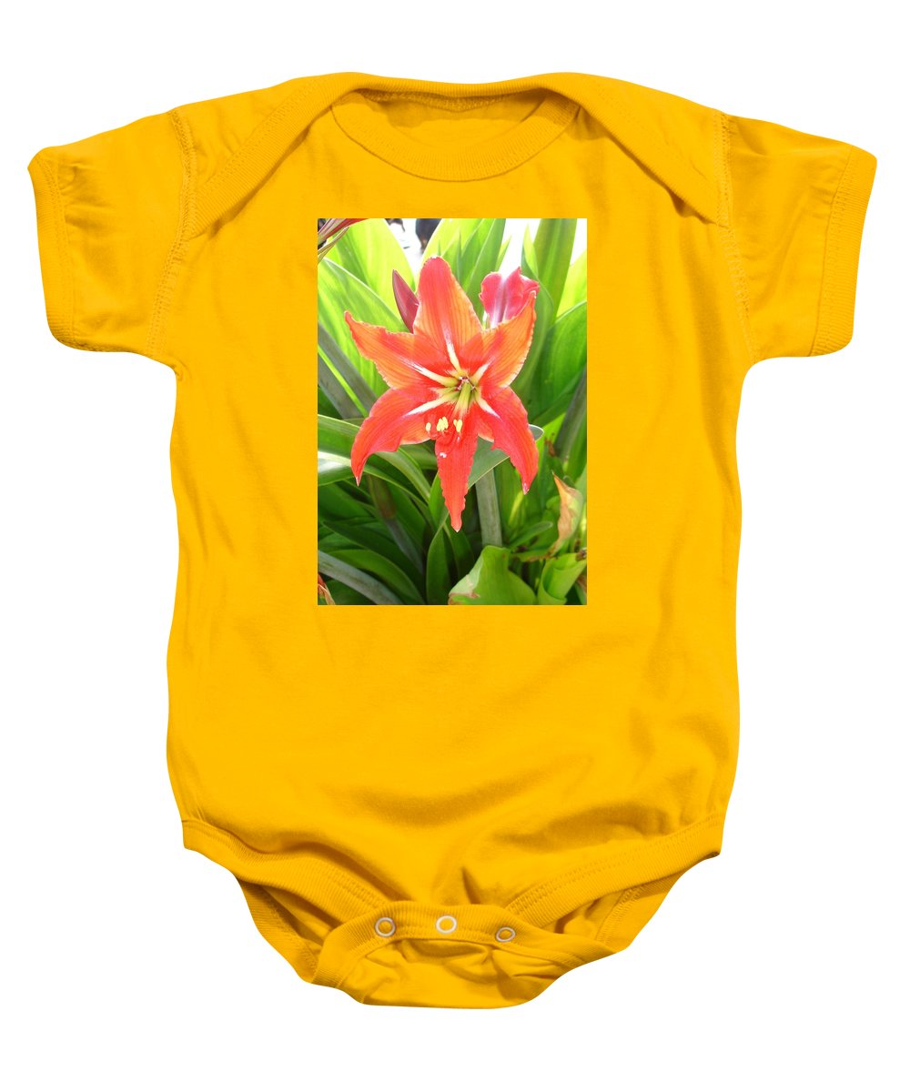 Flower Baby Onesie featuring the photograph Orange Amaryllis Flower Blooms In Springtime by Taiche Acrylic Art