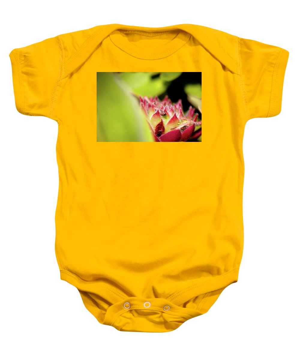 Hen And Chicks Flower Baby Onesie featuring the photograph Hen And Chicks by Sarah Wiggins