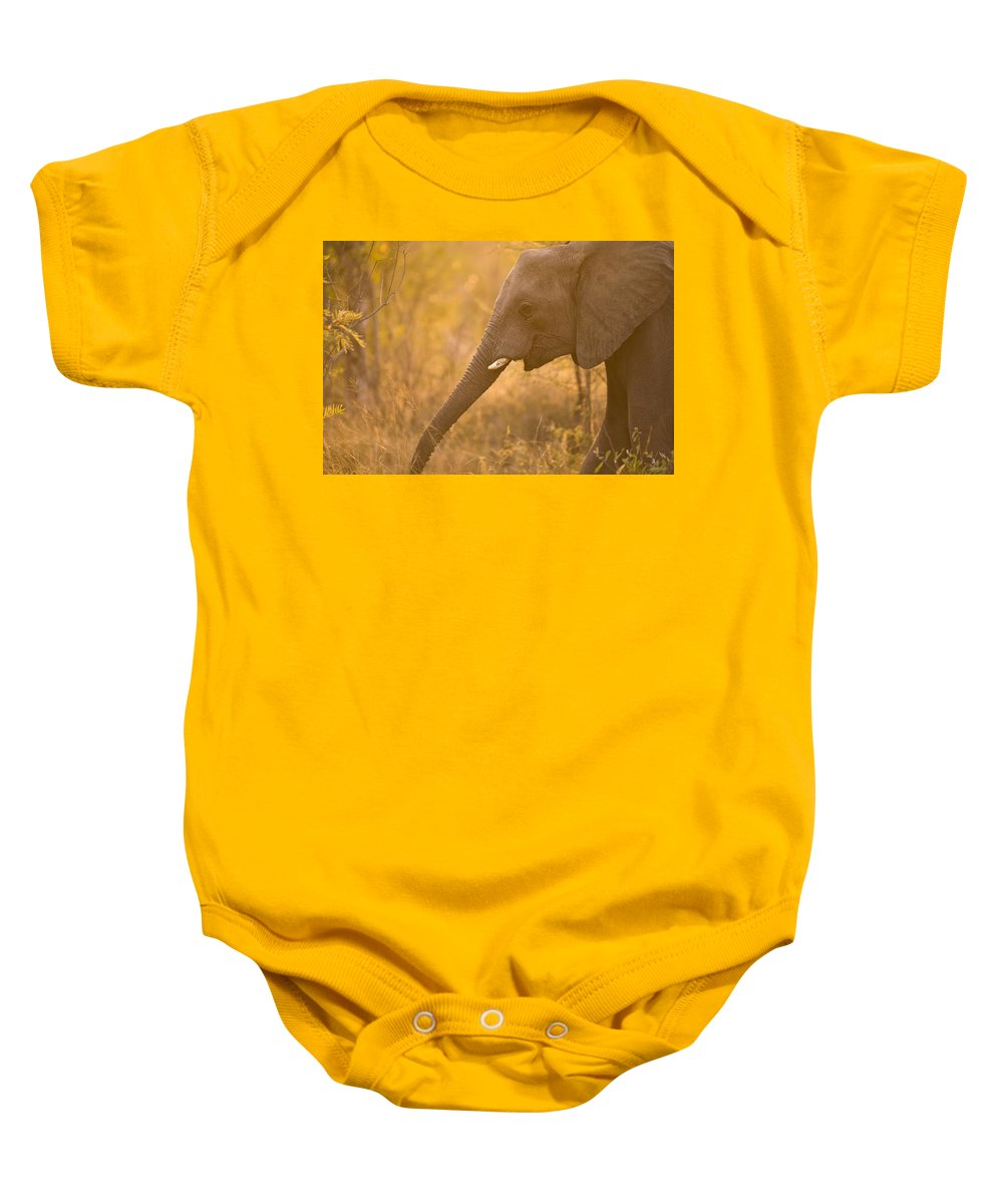 African Baby Onesie featuring the photograph African Elephant Loxodonta Africana by Stuart Westmorland