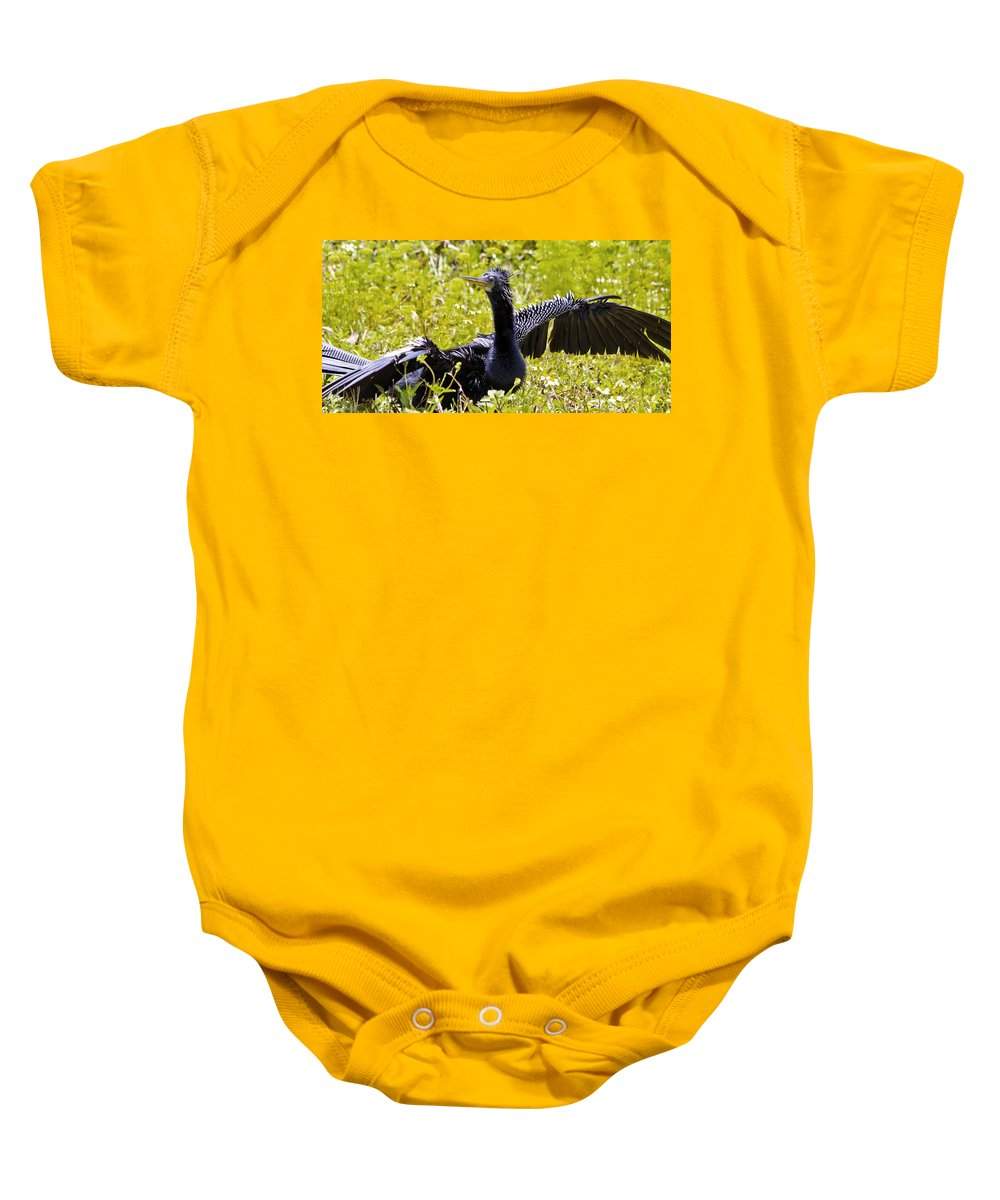 Anhinga Baby Onesie featuring the photograph Anhinga Drying by Roger Wedegis
