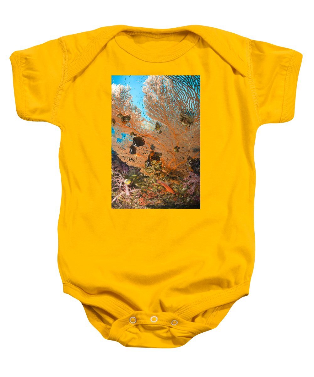 Animal Baby Onesie featuring the photograph Collare Butterflyfish by Stuart Westmorland
