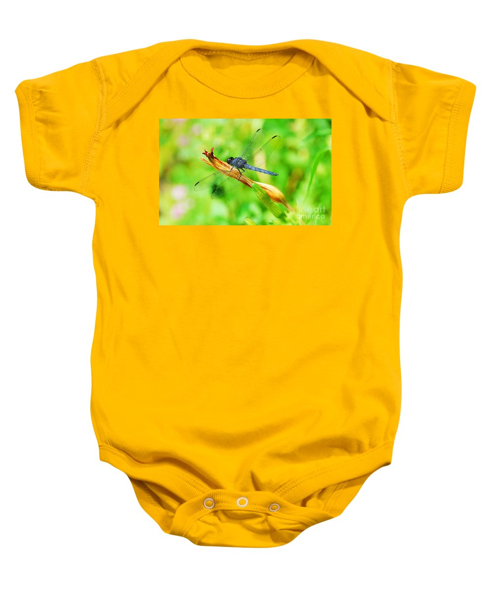 Nature Baby Onesie featuring the photograph Lace Wings by Cindy Manero