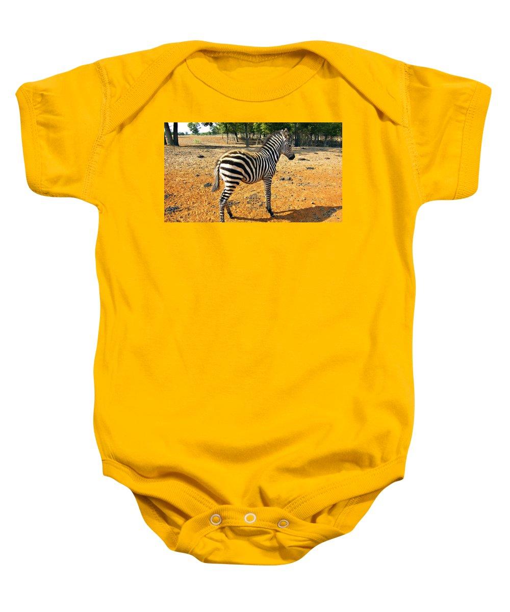 Juvenile Zebra Baby Onesie featuring the photograph Little Stripes by Douglas Barnard