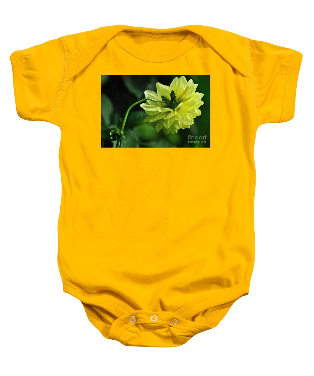 Photography Baby Onesie featuring the photograph Pastel Lemon Dahlia 2 by Kaye Menner