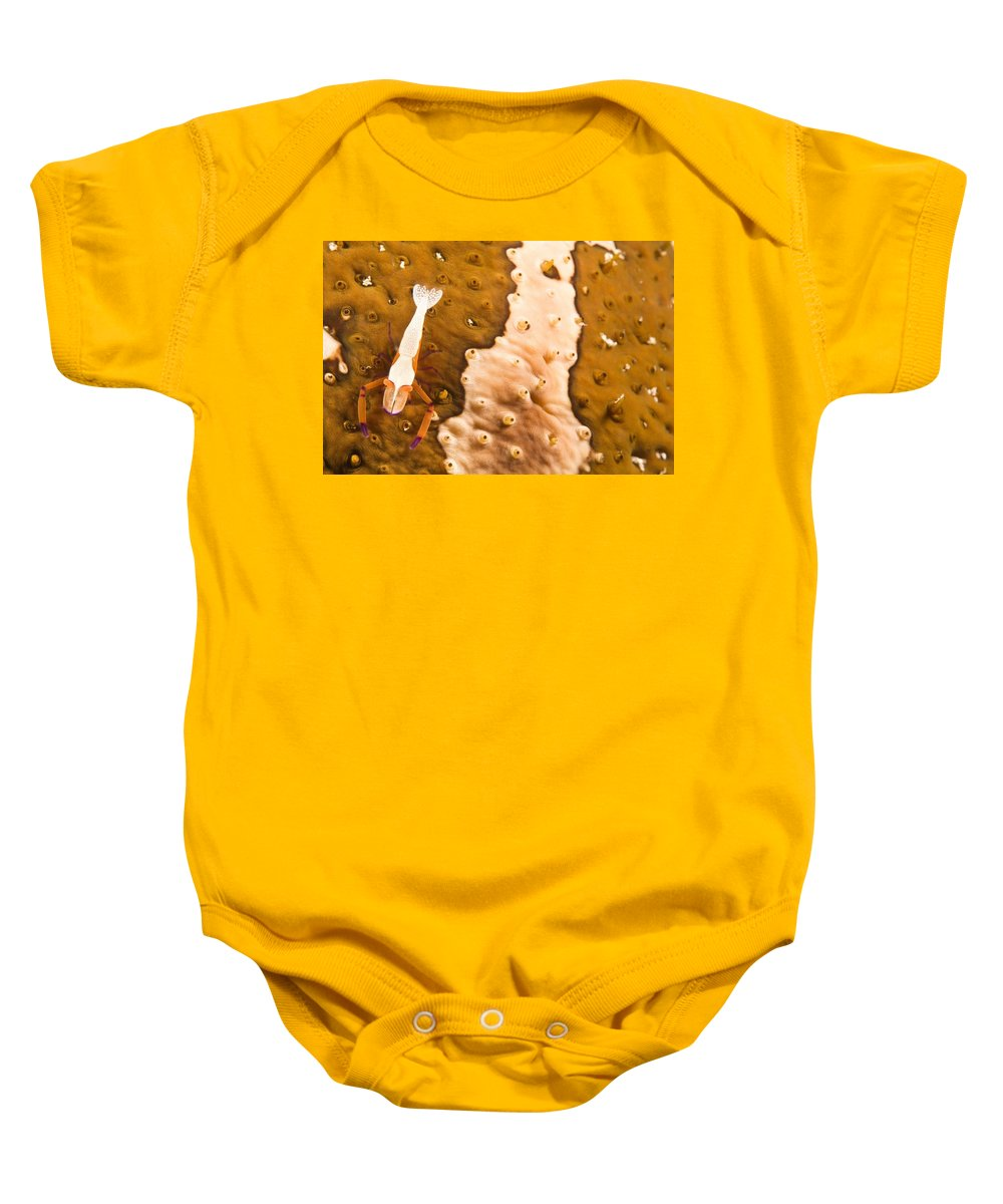 Animals Baby Onesie featuring the photograph Puerto Galera, Philippines, South East by Stuart Westmorland
