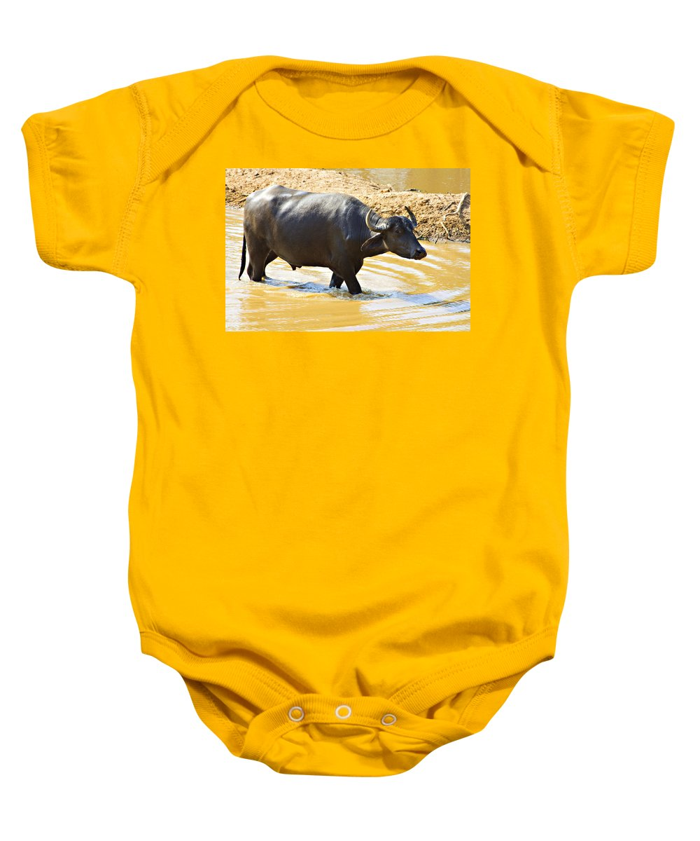 Water Buffalo Baby Onesie featuring the photograph Water Buffalo by Douglas Barnard