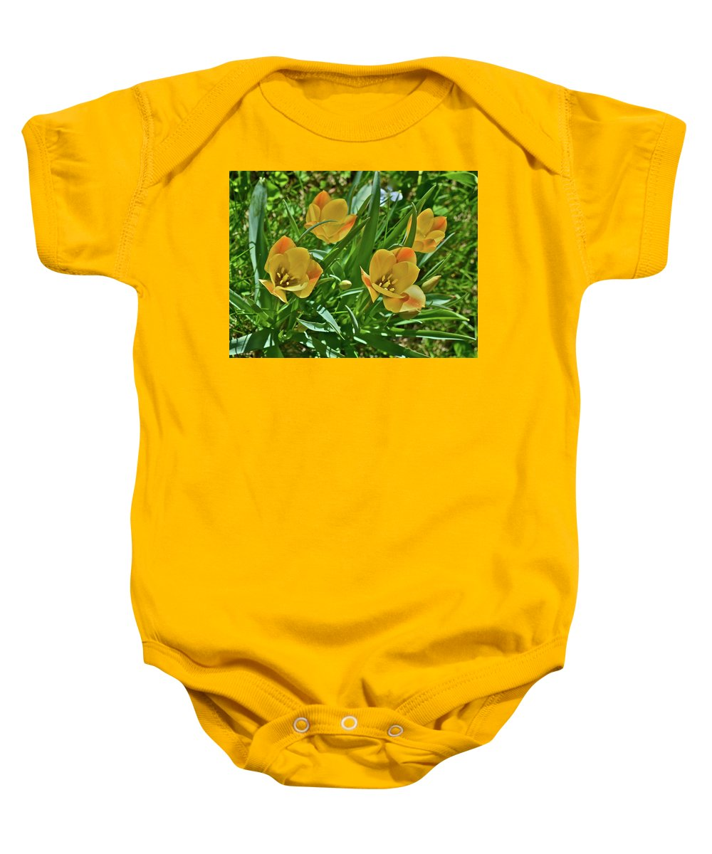 Tulips Baby Onesie featuring the photograph 2016 Early May Meadow Garden Bright Gem Batalin Tulip by Janis Nussbaum Senungetuk