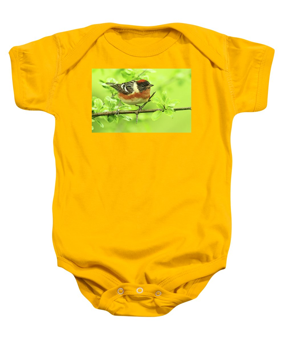 American Baby Onesie featuring the photograph Bay-breasted Warbler by Mircea Costina Photography