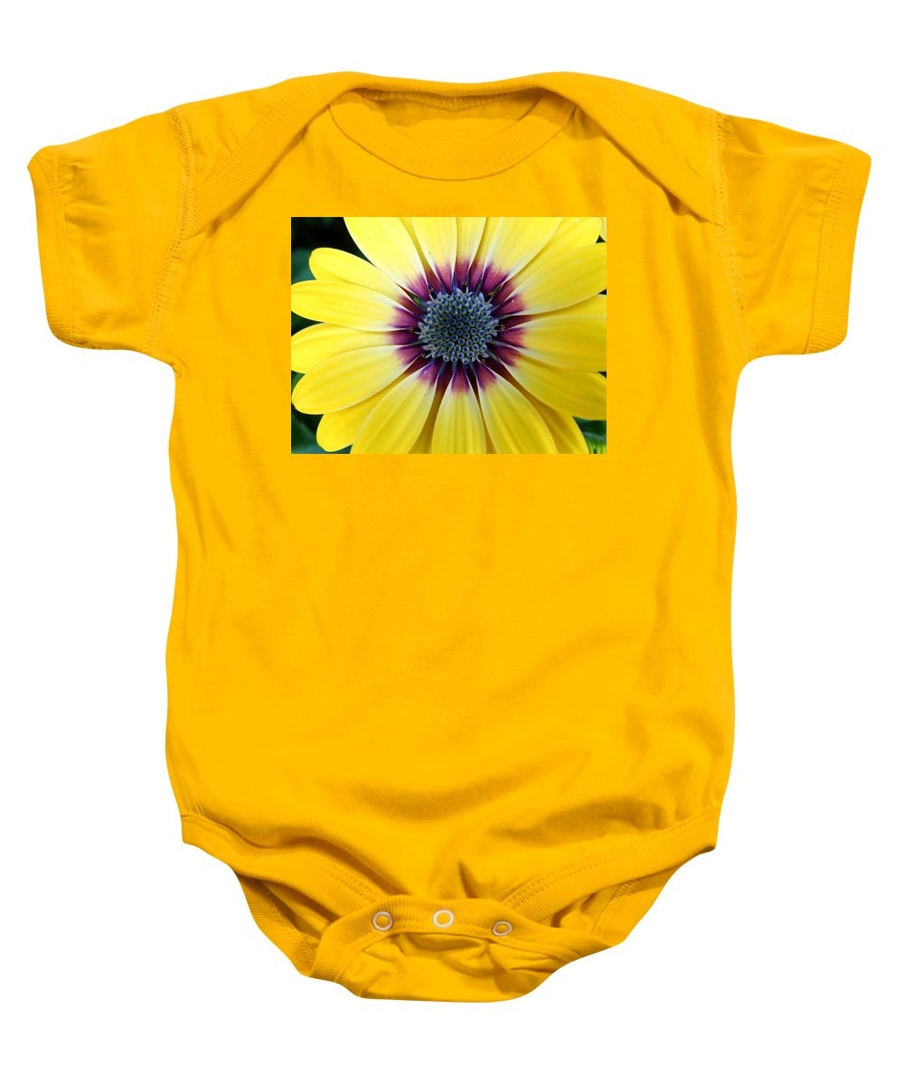 Close-up Of A Yellow African Daisy Baby Onesie featuring the photograph Close-up Of A Yellow African Daisy by Cynthia Woods