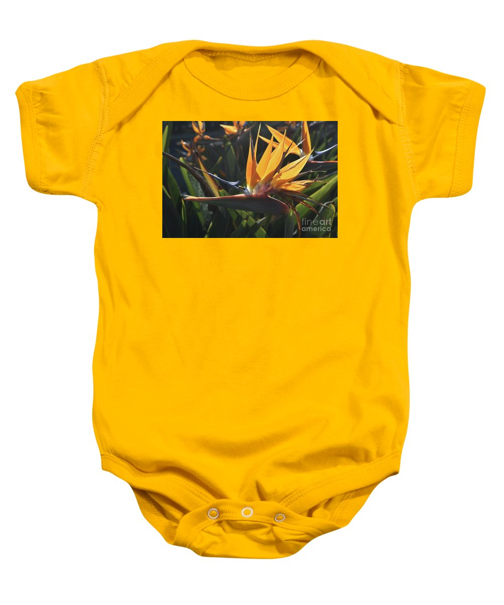 Bird-of-paradise Baby Onesie featuring the photograph Close Up Photo Of A Bee On A Bird Of Paradise Flower by DejaVu Designs