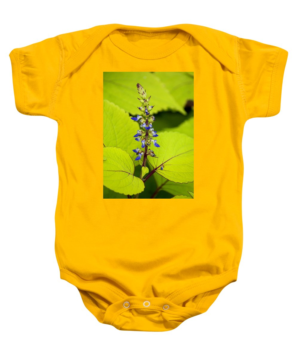 Flowers Baby Onesie featuring the photograph Flower 6 by Ben Upham III