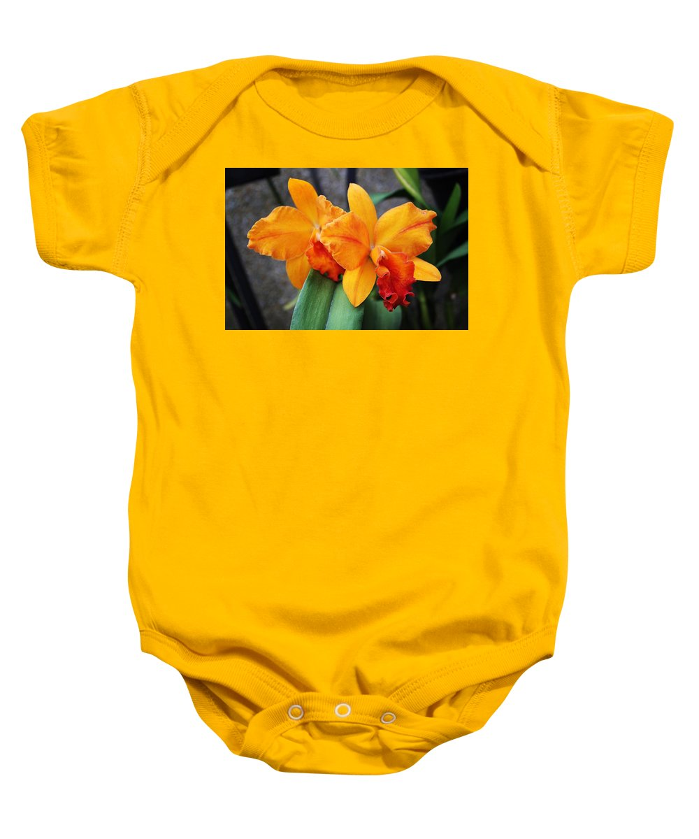 Color Baby Onesie featuring the photograph Flower Explosion1 by Bob Wantz