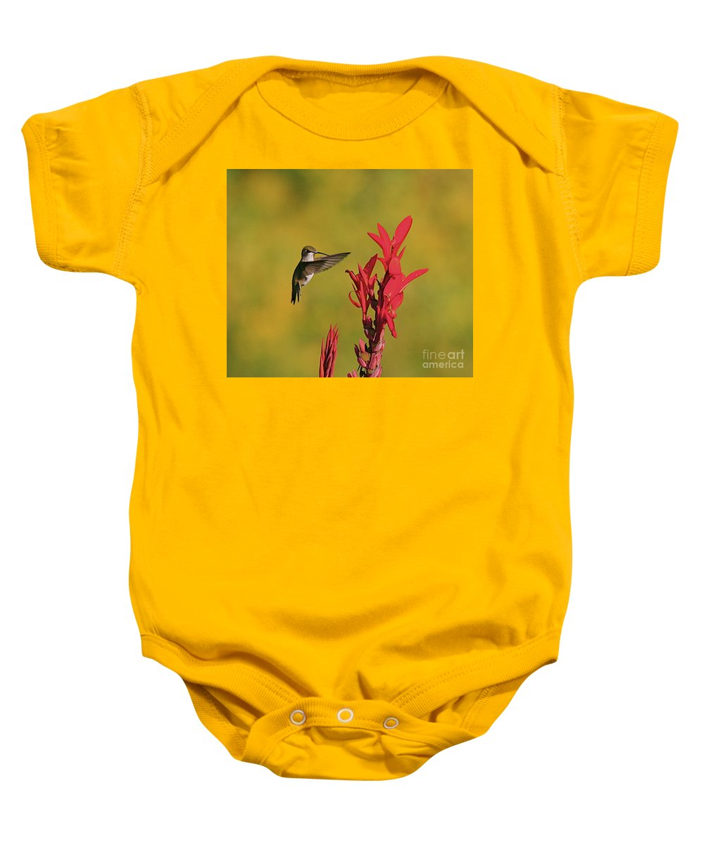 Humming Bird Baby Onesie featuring the photograph Hummer by Robert Pearson