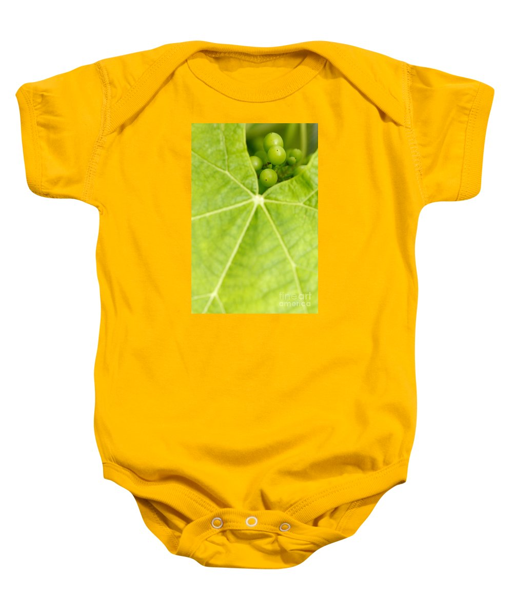 Vineyards Baby Onesie featuring the photograph Maturing Wine Grapes by Gaspar Avila