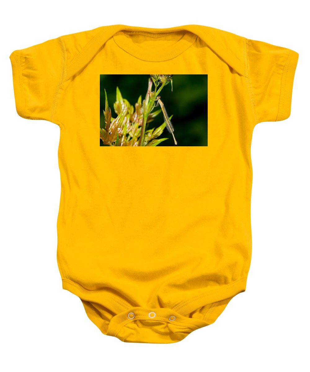 Damselfly Baby Onesie featuring the photograph newly emerged Rambur's forktail by Royal Tyler
