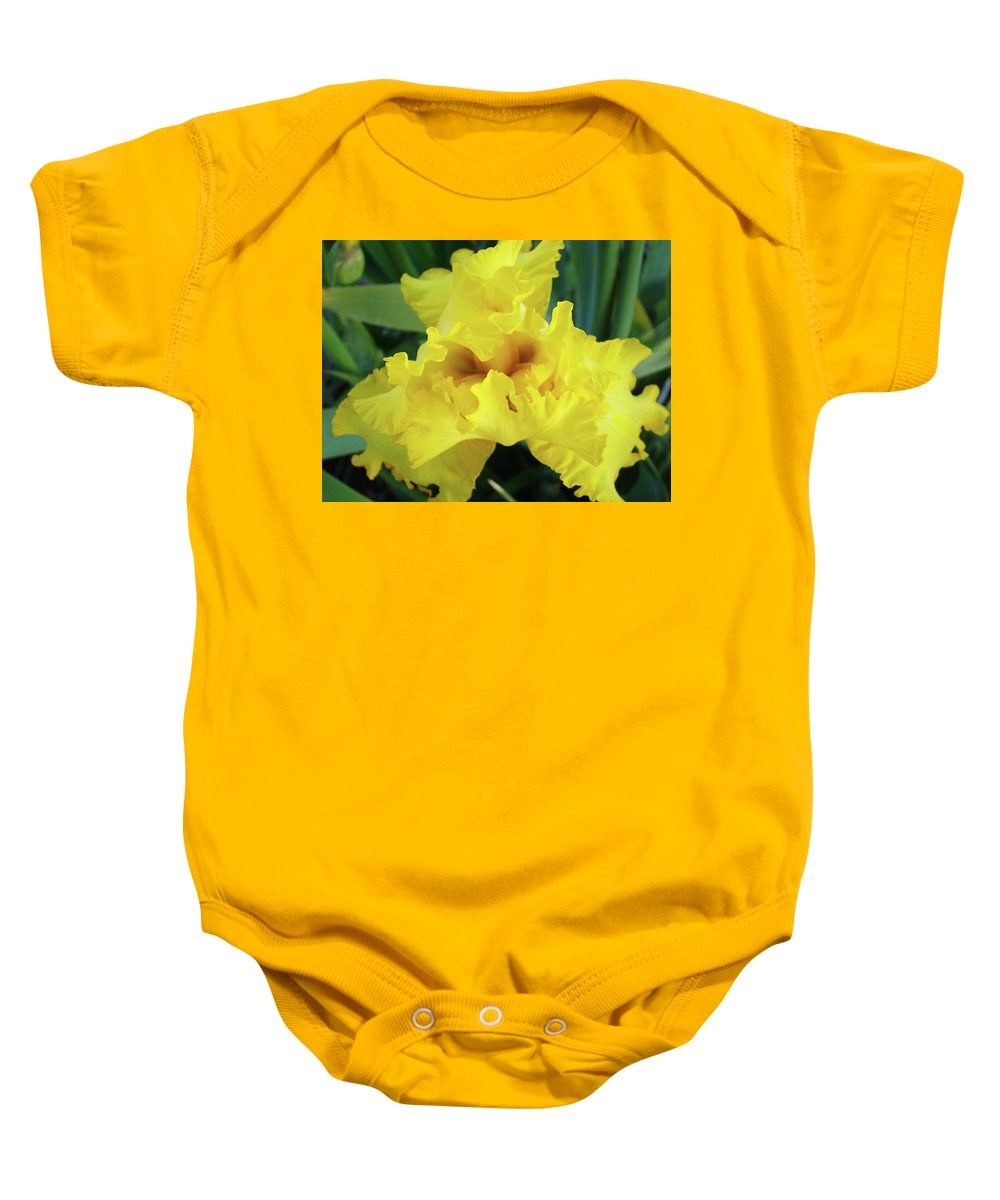 Iris Baby Onesie featuring the photograph Office Art Yellow Iris Flower Irises Giclee Prints Baslee Troutman by Baslee Troutman