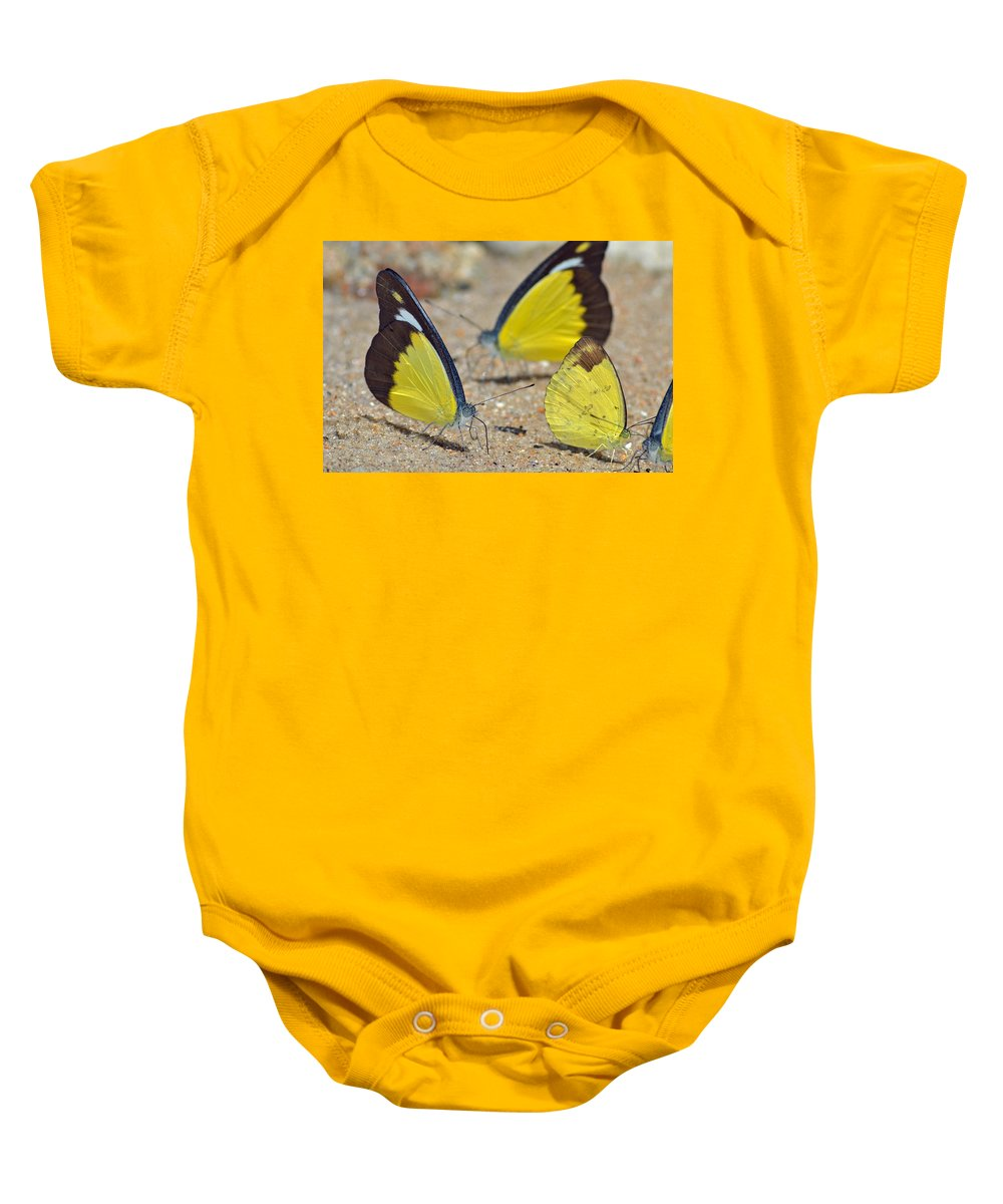 Butterflies Baby Onesie featuring the photograph Puddling by Rashdy Arshad
