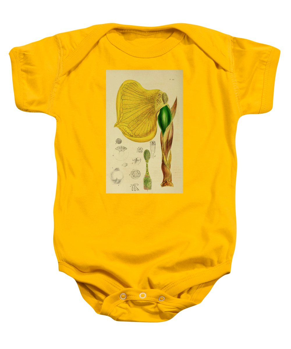 Botany Baby Onesie featuring the painting Remusatia Vivipara Xxx by Unknown