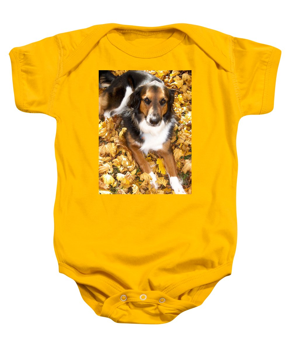 Collie Baby Onesie featuring the photograph Stay Gold by Trish Tritz